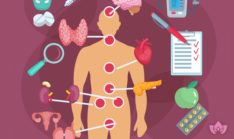 Things you have to learn about your Endocrine System | Mindful Healing | Mississauge Naturopathic Doctor