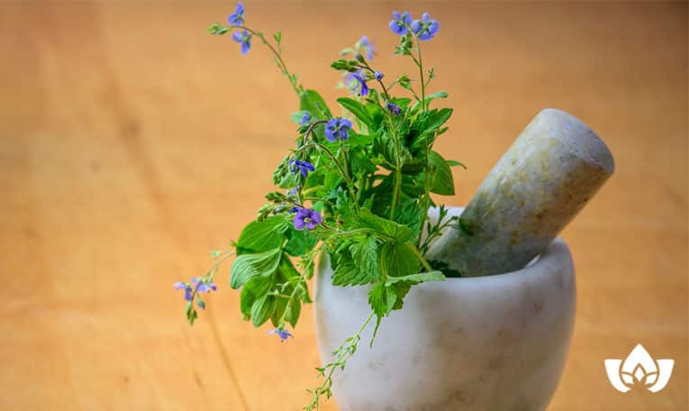 herbs to improve estrogen levels | Mindful Healing | Naturopathic Doctor Mississauga